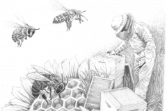 beekeeperimage